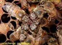 presentation-echange-abeilles7