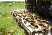 presentation-installation-abeilles5